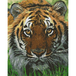 Kit XXL Tigre du bengale avec cadre aluminium brossé