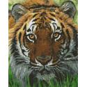 Kit XXL Tigre du bengale LIVRAISON ESPAGNE