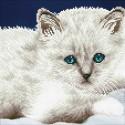 Kit chat Blanc