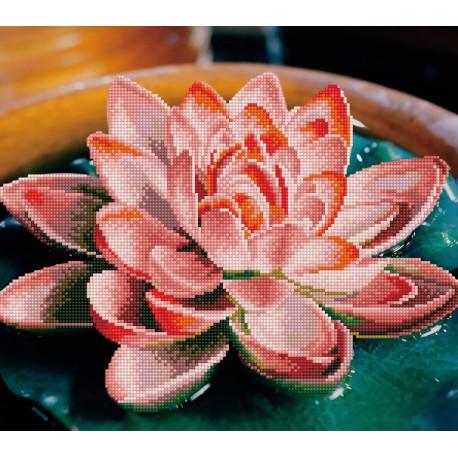 Kit Fleur de Lotus