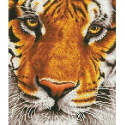 Kit Tigre du Bengale