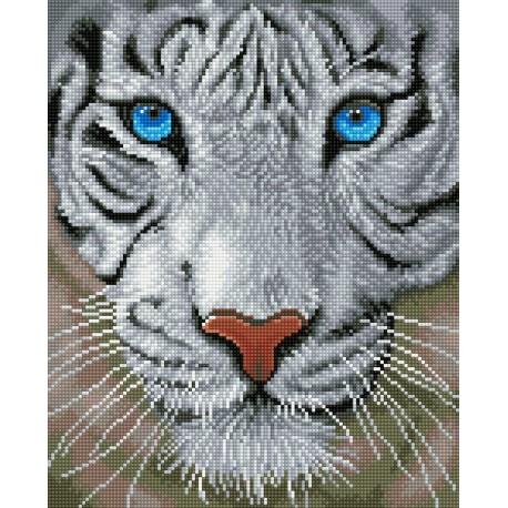 Kit Tête de Tigre Blanc