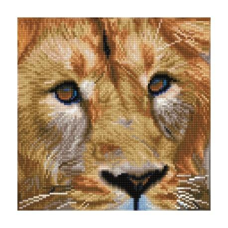 Kit Portrait de Lion