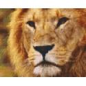 Lion 4 grandes plaques