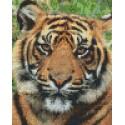 Tigre 4 grandes plaques